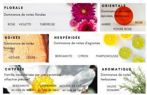 Comprendre les 7 familles olfactives