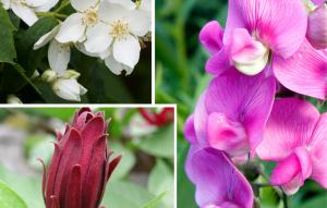 4 fleurs rares en parfumerie à connaitre